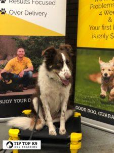 Dog Training Bentonville