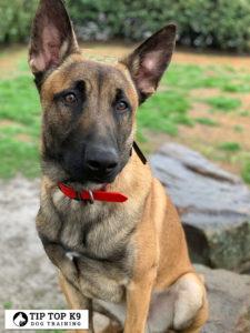 Dog Training In Claremore