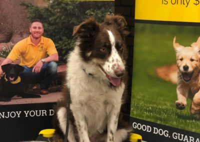 Find The Dog Trainers In Tulsa