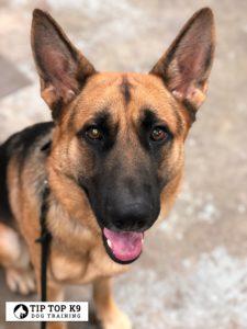 Dog Trainers Tulsa 6