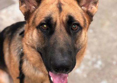Dog Trainer Oklahoma City