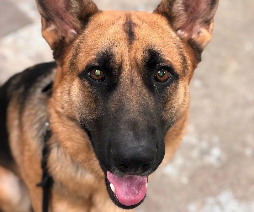 Dog Trainer Oklahoma City | Potty Training A Dog? No Problem!