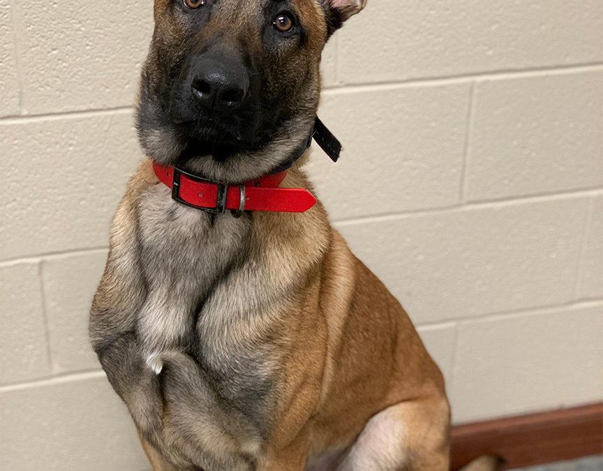 Tulsa Dog Training Company | Our Team Helps Your Dog