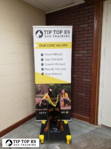 OKC Dog Trainers