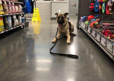 Owasso Dog Training Company
