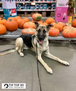 Dog Trainers Tulsa 9