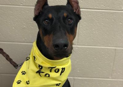 Oklahoma City Dog Trainers