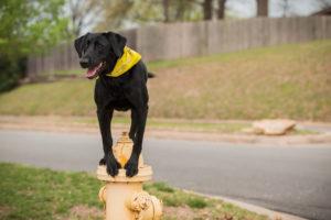 Dog Training Arkansas
