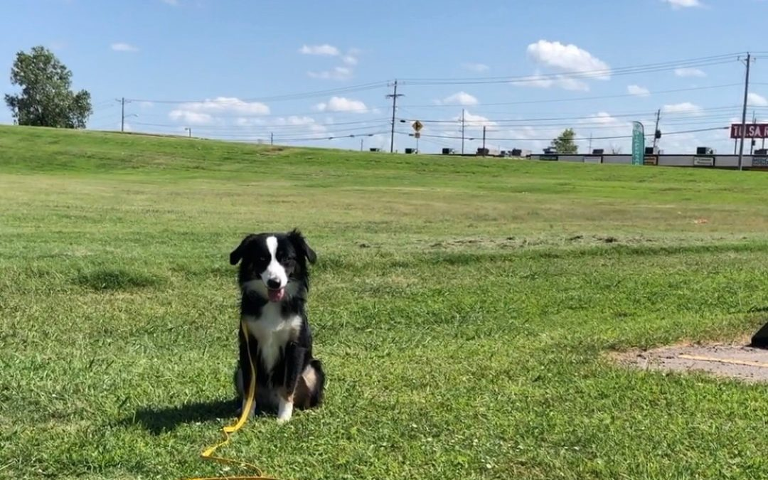Dog Training In Owasso | You Can Trust Us To Do Our Job