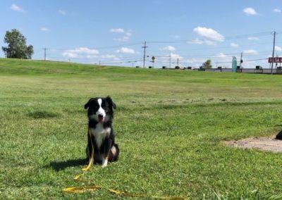 Dog Training In Owasso