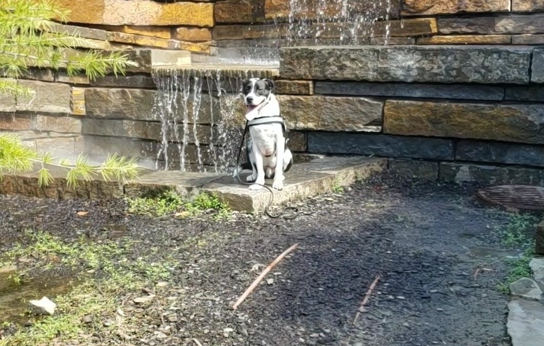 Dog Training Tulsa | your satisfaction is Guaranteed