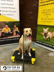Dog Training Bartlesville