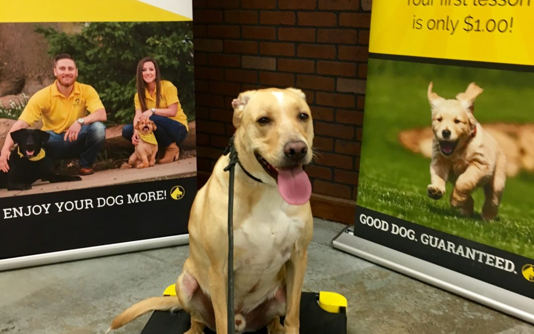 Dog Training West Jordan Utah | Quality You Can See