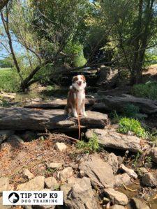 Top Edmond Dog Training