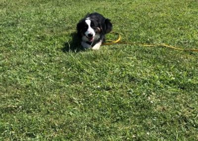 Dog-Training-Tulsa-2