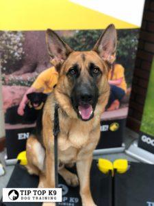 Best Gilbert AZ Dog Training