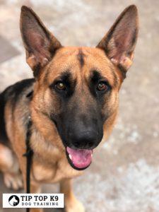 Ft Worth Dog Training