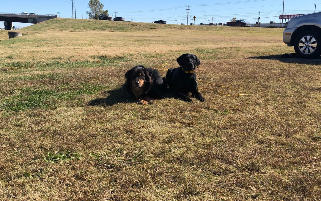 Dog Obedience School Oklahoma | We Stop All Nuisances