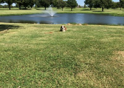 Dog-Training-Tulsa-3