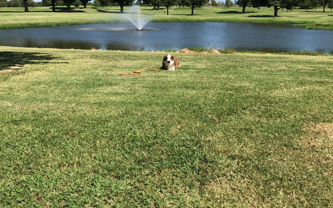 Dog Training Tulsa | We Have Dogs On Our Minds