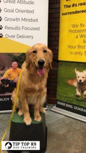 Dog Training in Tulsa