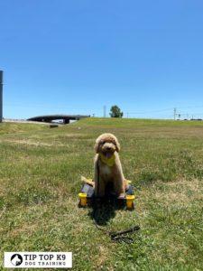Dog Training In Tulsa 10