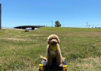 Norman Dog Training