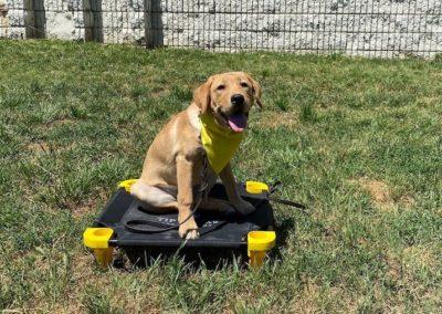 Dog Training In Tulsa 11