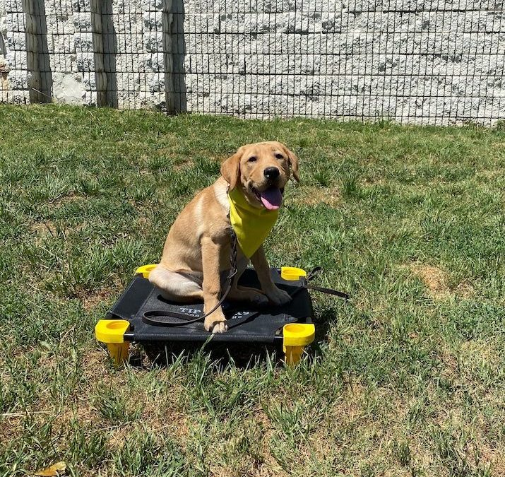 Dog Training Farmington Hills | We Are Going To Make Sure That You Get A Dog That Is Well Behaved!
