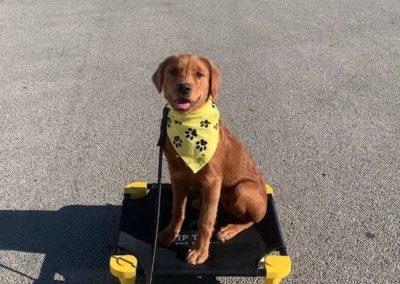 Yukon Dog Training