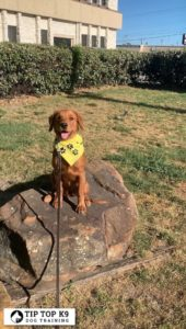 Dog Training In Tulsa 14