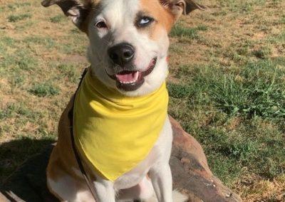 Dog Training In Tulsa 15