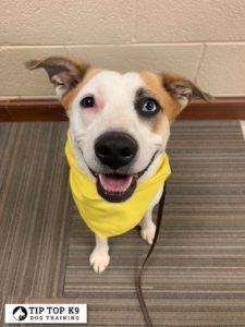 Dog Training In Tulsa 16