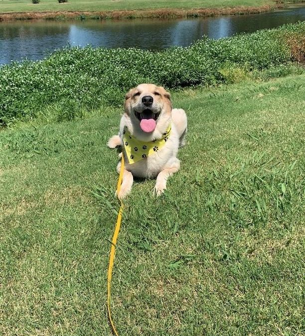 Dog Training Tulsa | Serving Tulsa, and 11 Other Locations