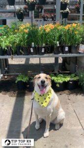 Dog Training In Tulsa 19
