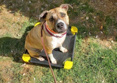 Dog Training In Tulsa 2