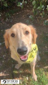 Dog Training In Tulsa 20
