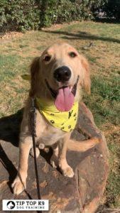 Dog Training In Tulsa 21