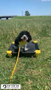 Dog Training In Tulsa 22