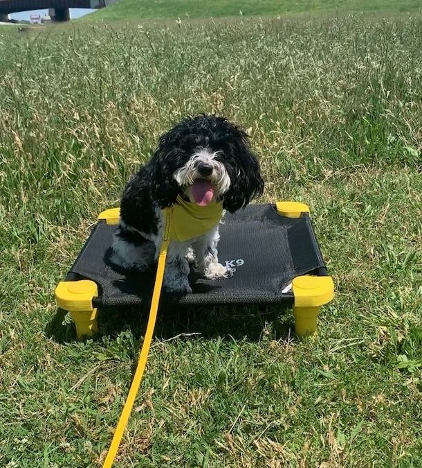 Dog Training In Tulsa | We Truly Are The Best You Can Find