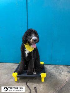 Dog Training In Tulsa 3