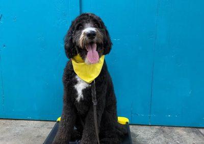 Dog Training In Tulsa 4