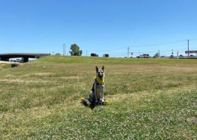 Dog Training In Tulsa 6