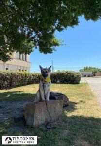 Dog Training In Tulsa 7