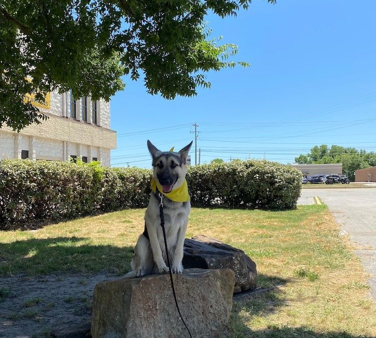 Dog Training In Tulsa | Is Your Dog Barking Up The Wrong Tree?