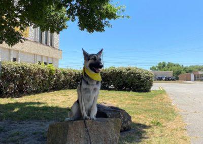 Dog Training In Tulsa 8