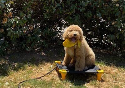 Dog Training In Tulsa 9