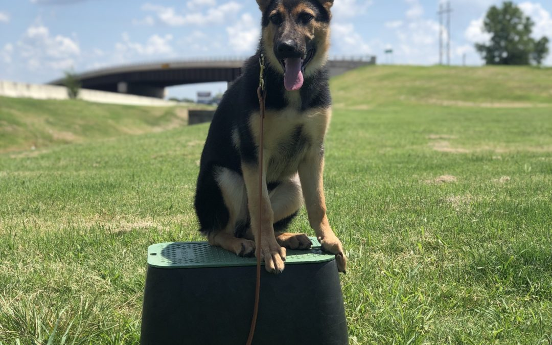 The Best Dog Training In Colleyville | We Have Different Options