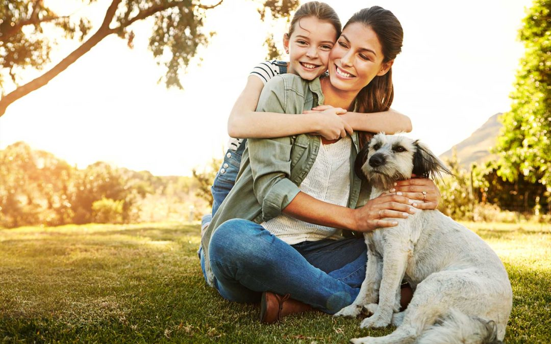 Dog Training In Southlake Texas | Our Team Is What You Needed