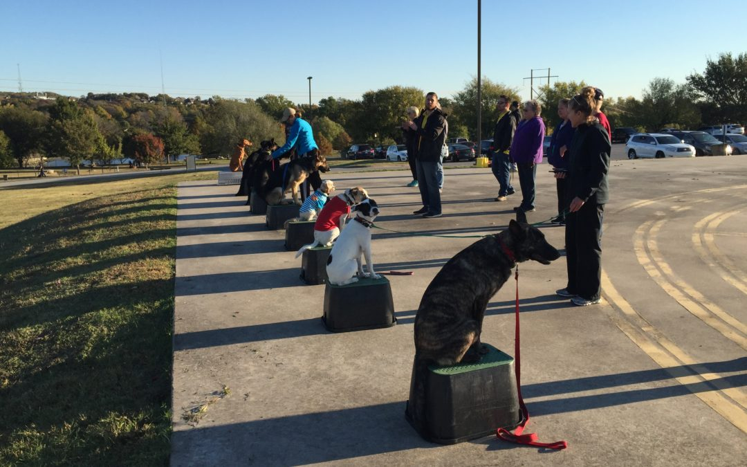 The Best Meridian Idaho Dog Training | Control Of Your Dog